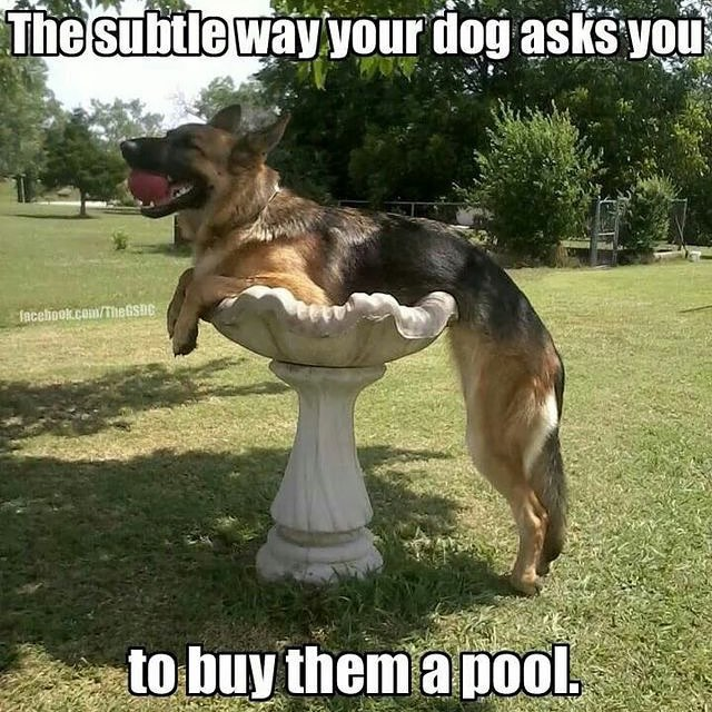 your dog wants a pool how to know