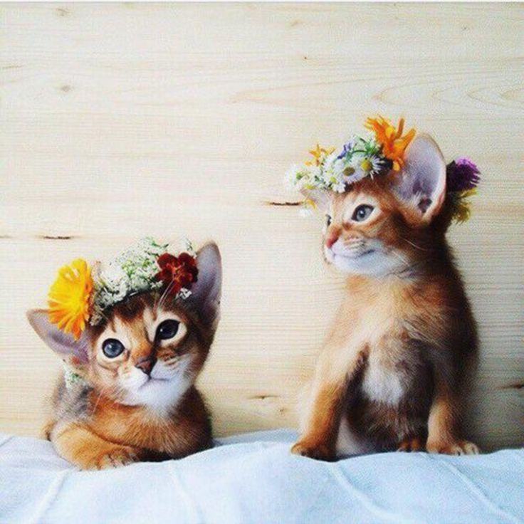 beautiful tabby kittens with flowers in their hair