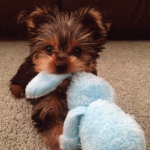 adorable cute puppy with bunny featured
