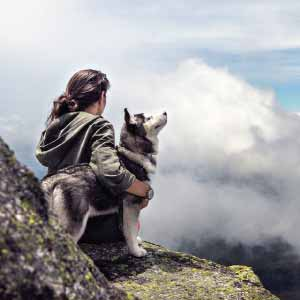 7-husky-tips-for-new-owners-feat