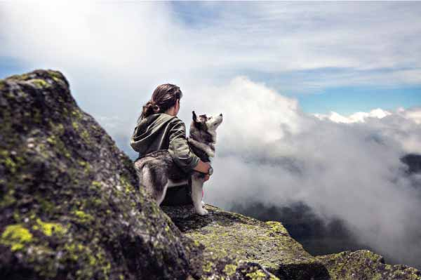 7 tips for husky owners
