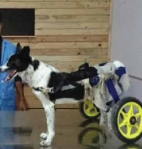 vet invents new cart for injured dogs
