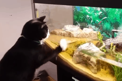 Adorable assault on the family fish tank