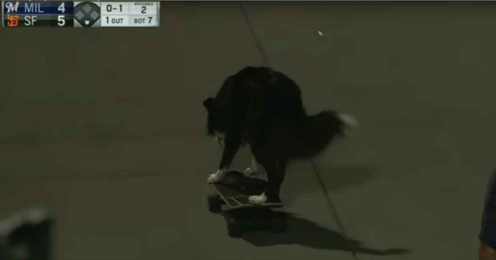 skateboarding dog giants game